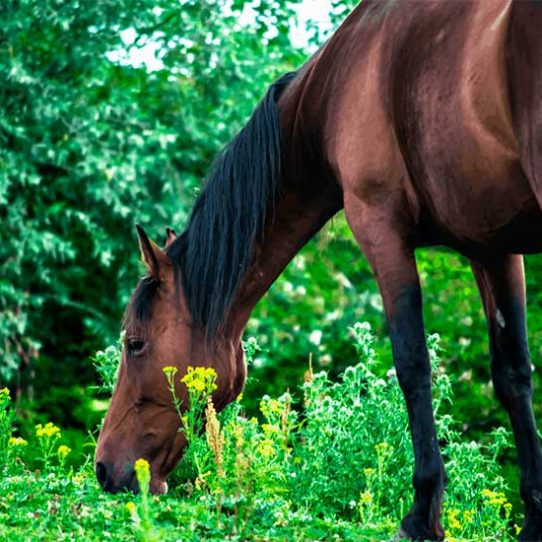 Why does my horse lose weight?